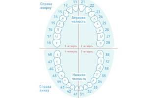 Как узнать номер зуба