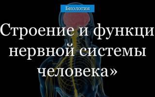 Как выглядят нервы человека