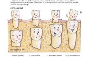 Есть ли у молочных зубов нервы