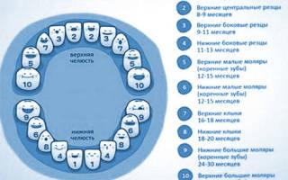 Прорезывание верхних зубов у грудничков